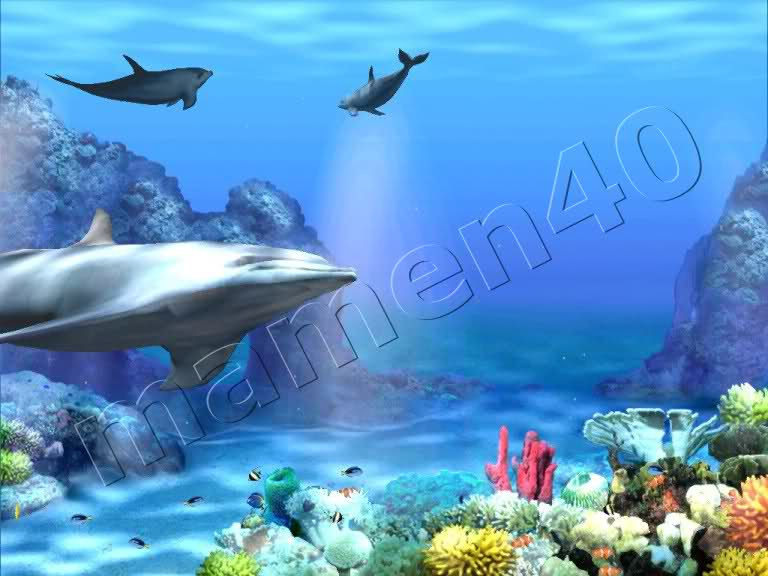 Living 3d Dolphins Animated Wallpapers High Quality Wallpaper Picture 768x576
