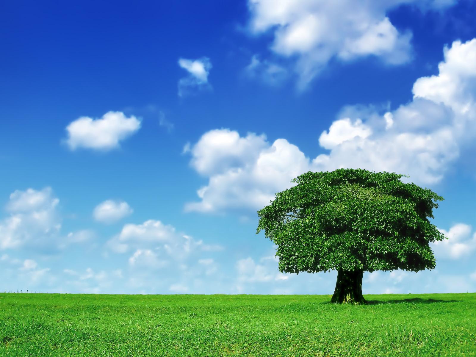 Beautiful Tree Wallpaper HD Freetopwallpapercom 1600x1200
