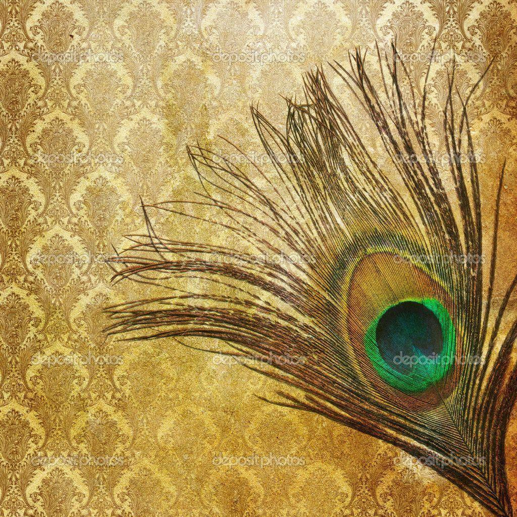 Peacock Feather Backgrounds 1024x1024