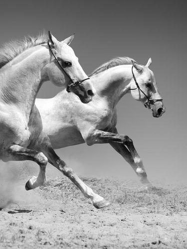 White Horses screensaver for Amazon Kindle 3 375x500