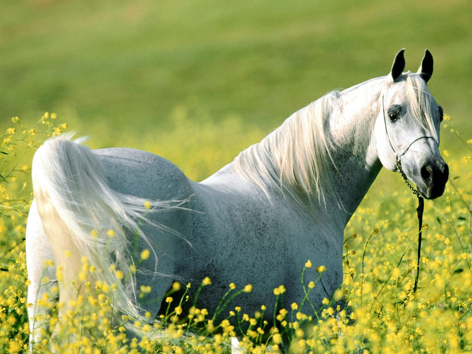 Horse Wallpapers Wild Horses Photos Animal Photo 1600x1200