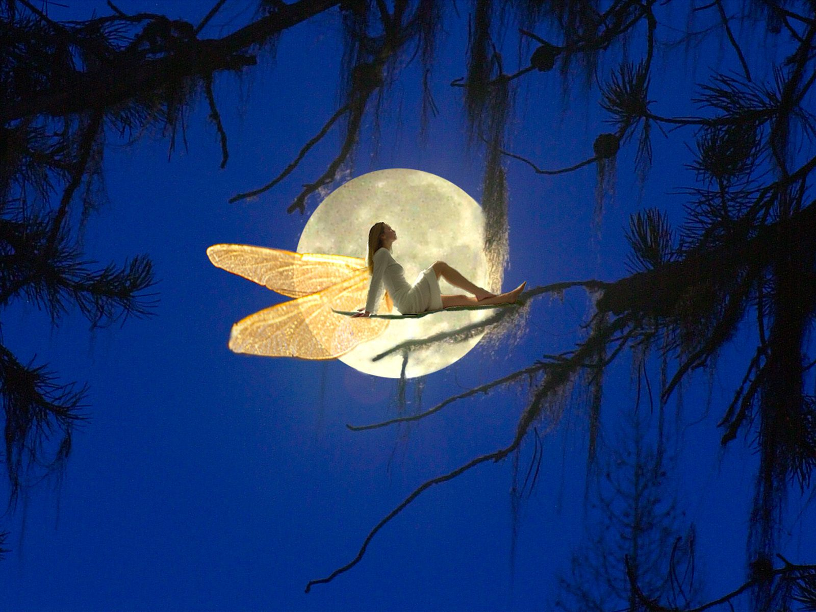 Background   Fairytale Moon   Cool Backgrounds and Wallpapers 1600x1200