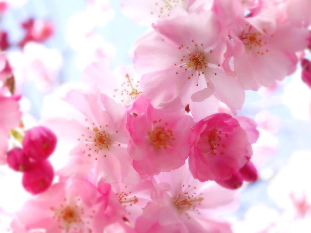 Pretty Flower Backgrounds   HD Wallpapers 1024x768