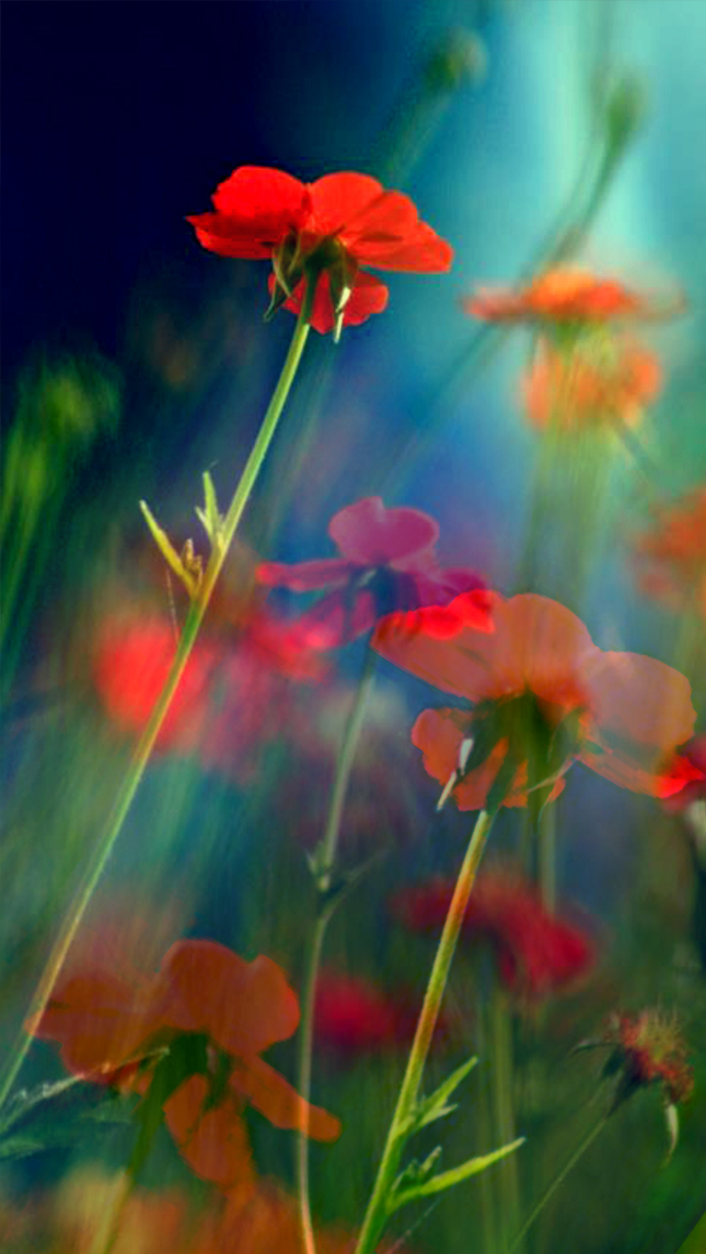 Red Flowers iPhone wallpaper 640x1136