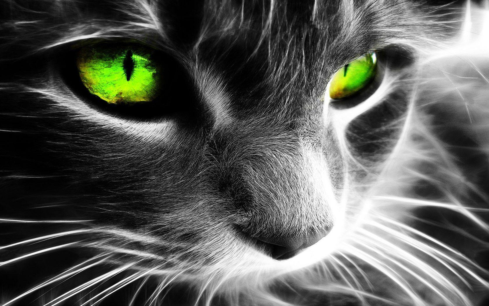 Green Eyes Wallpapers 1680x1050