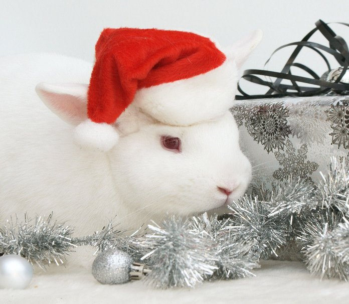 Christmas Tree On Desktop