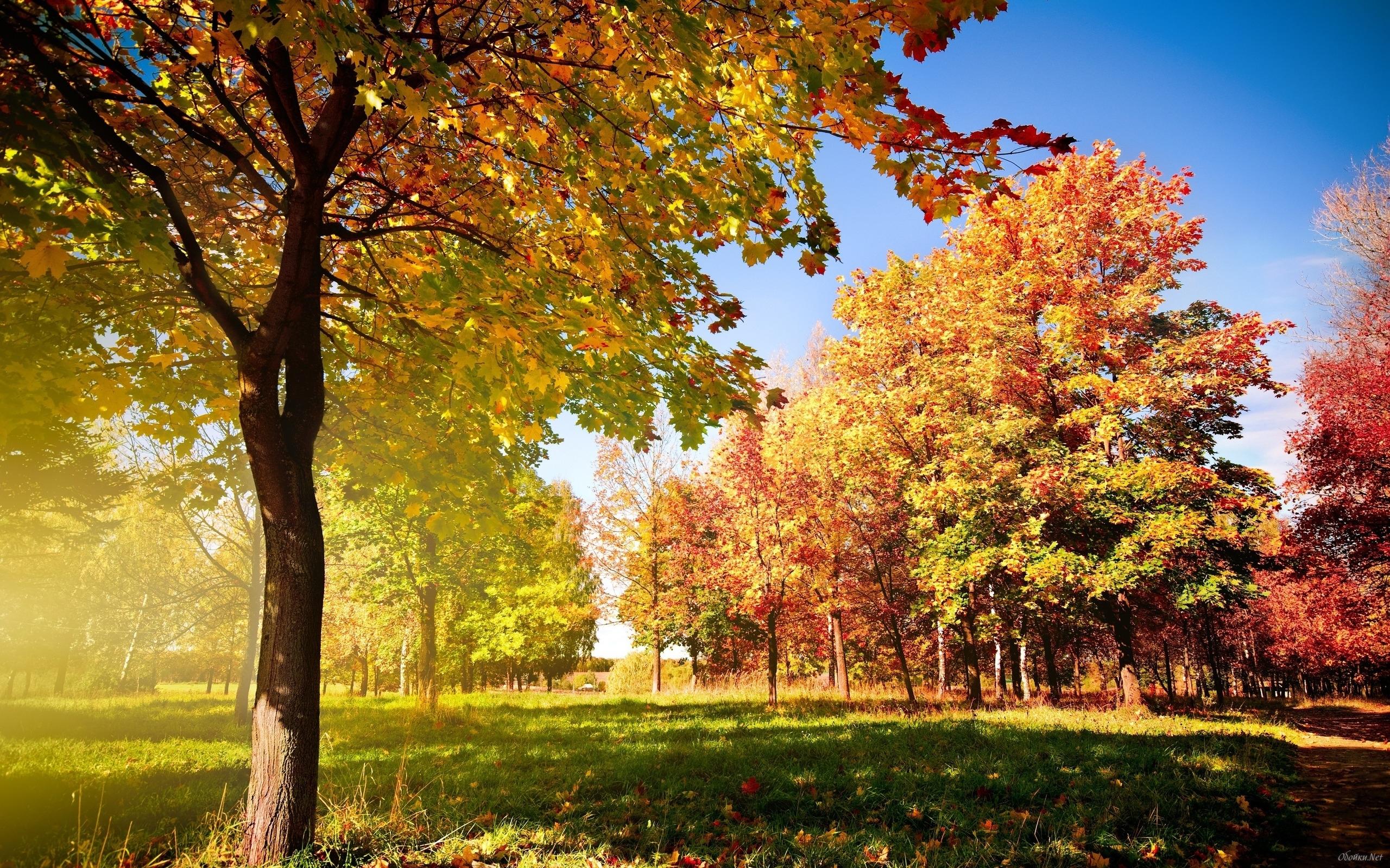 Color early fall HD Desktop Wallpaper HD Desktop Wallpaper 2560x1600
