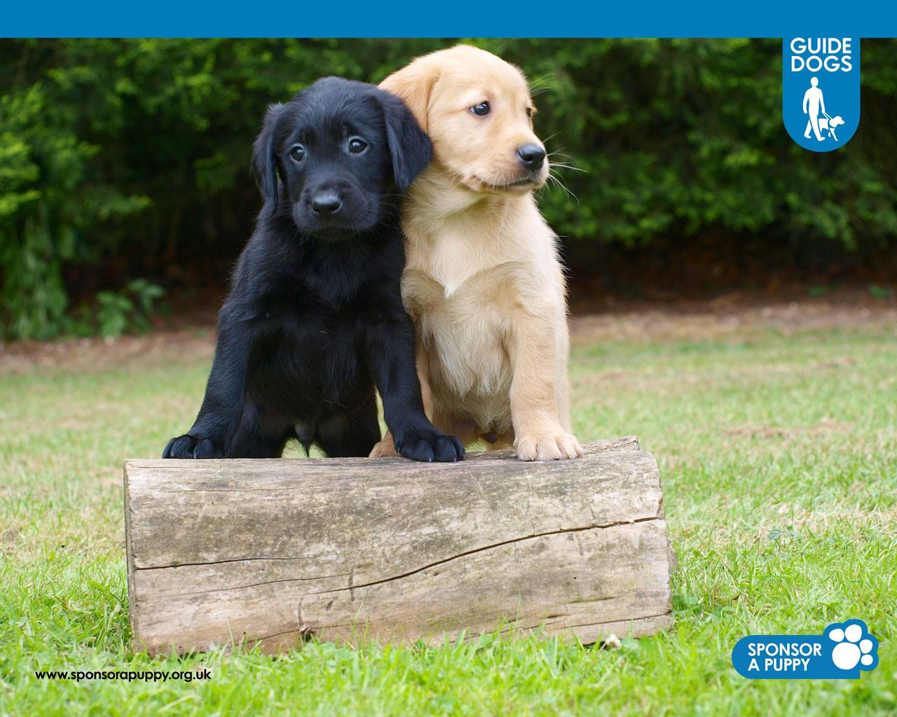 Sponsor a Puppy Playzone 1280x1024