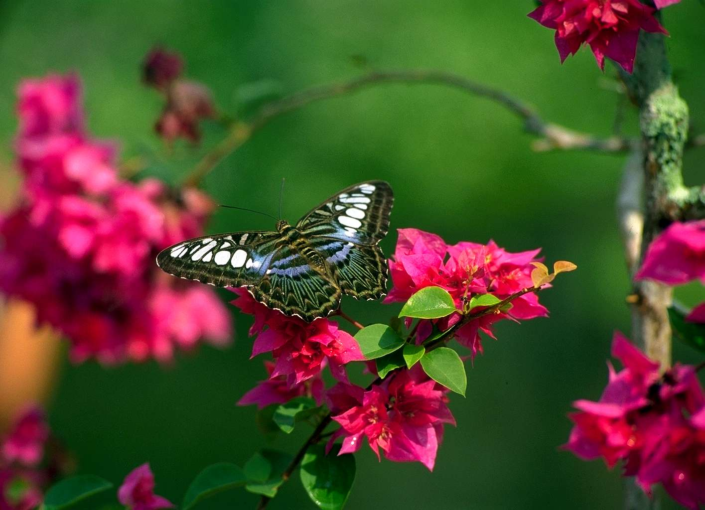 flower lovers Flowers butterfly natural beauty desktop wallpapers 1415x1024