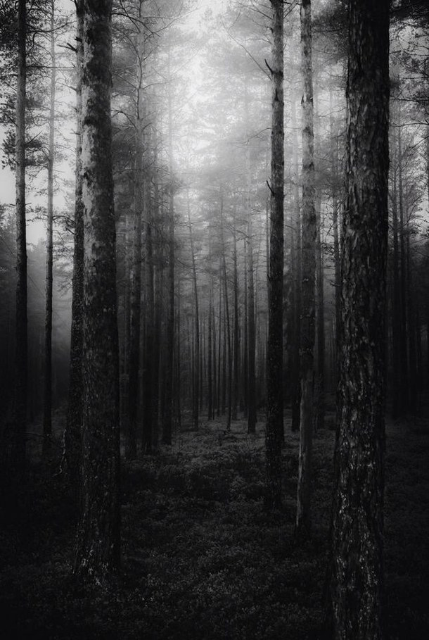 amazing awesome background black and white forest ghost grunge 610x909