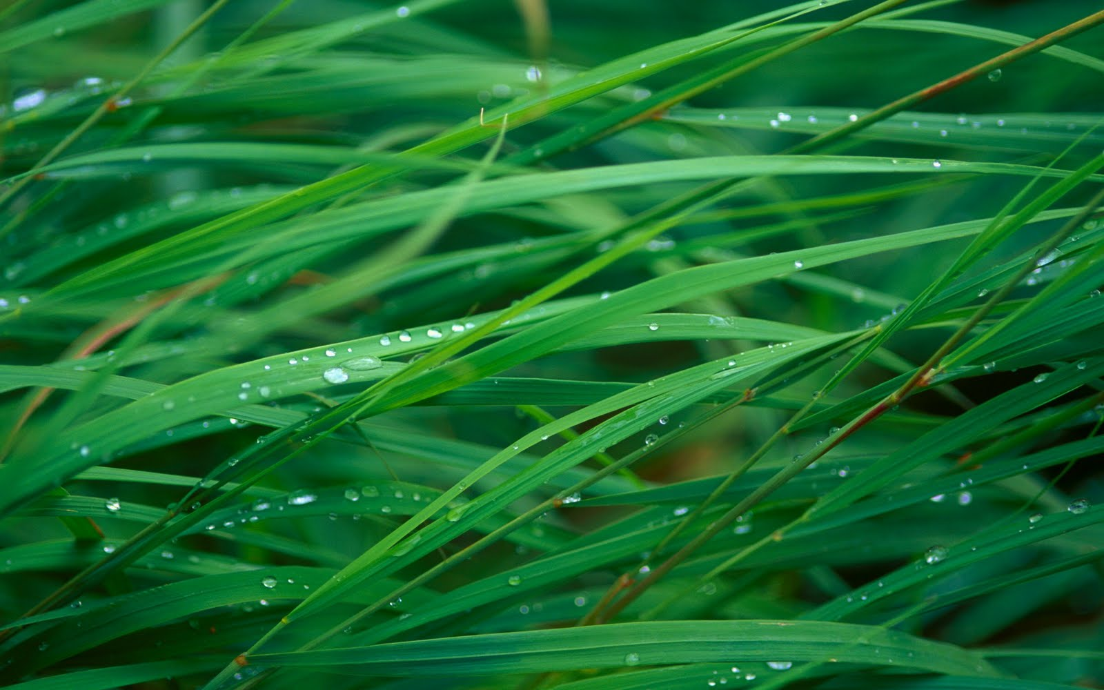 Wallpapers Box Mac Green Grass HD Wallpapers 1600x1000