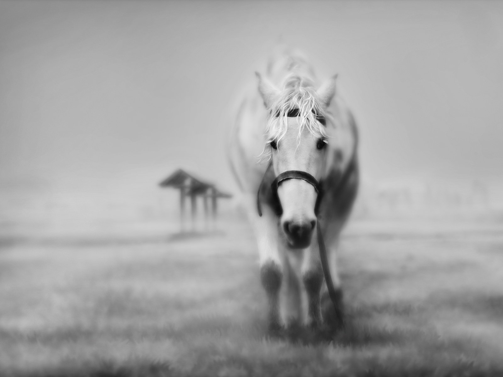 Black and white horse 1600x1200px Black and white detail horse 1600x1200