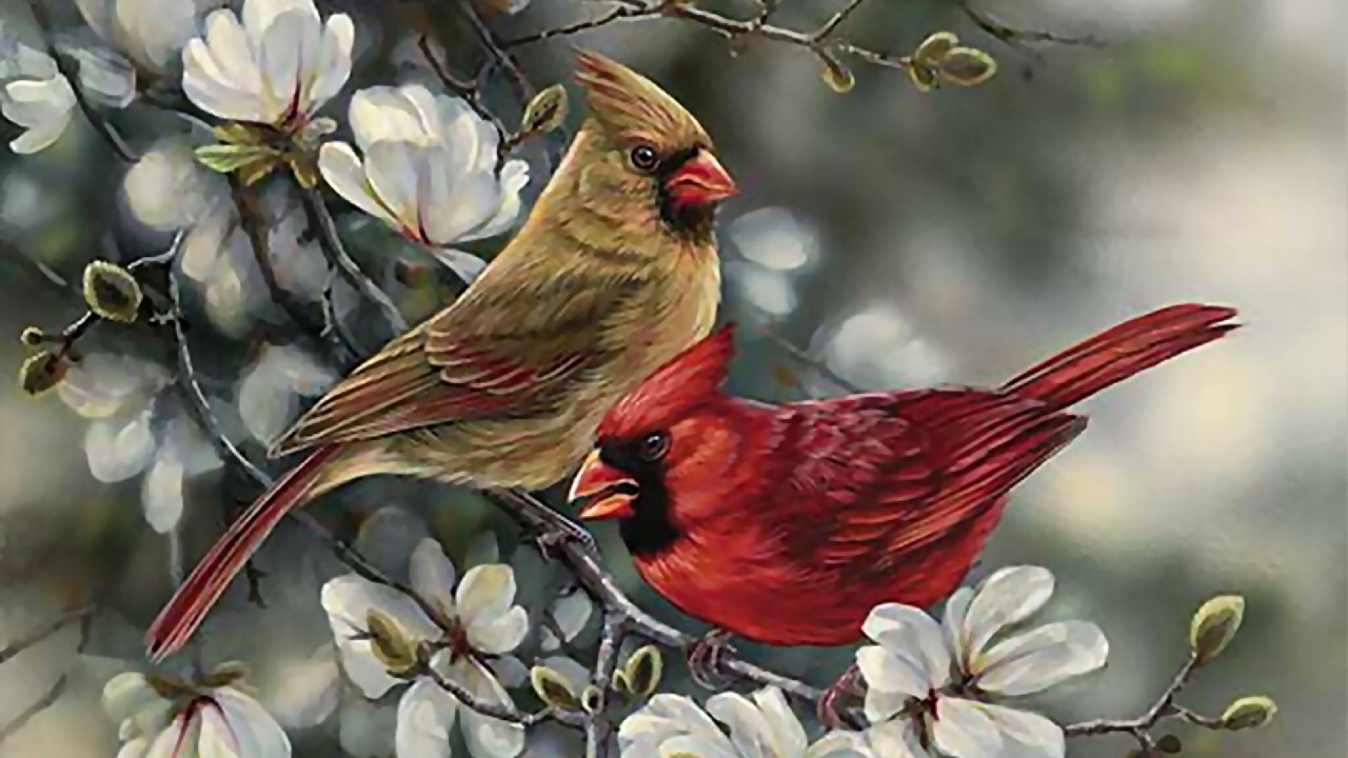 ScreenHeaven Cardinal pair f2 avian art wildlife wide 1920x1080