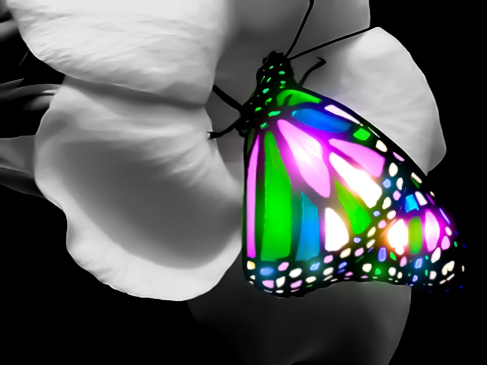 butterfly wallpaper 3d 1600a—1200 121281 hd wallpaper res
