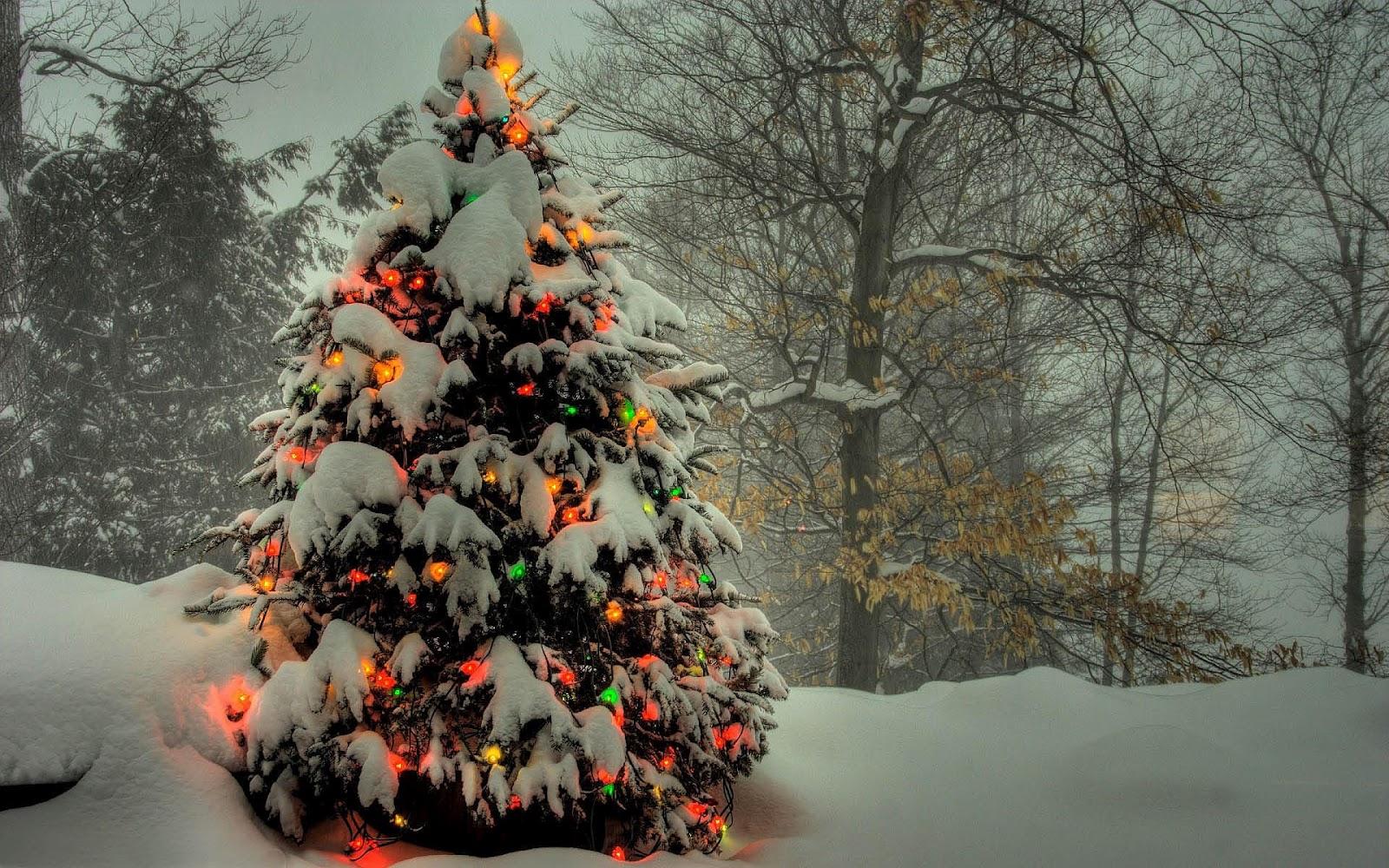 in de sneeuw met kerstverlichting aan HD winter wallpaper foto 1600x1000