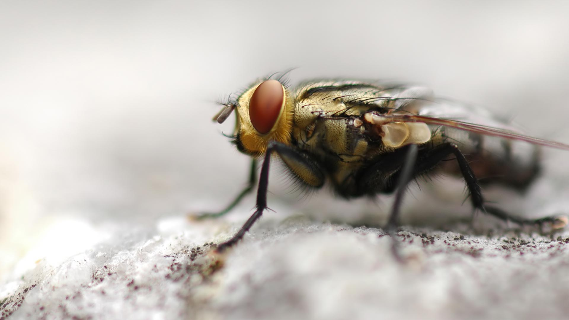 3D HD Fly Wallpaper   HD Wallpapers 1920x1080