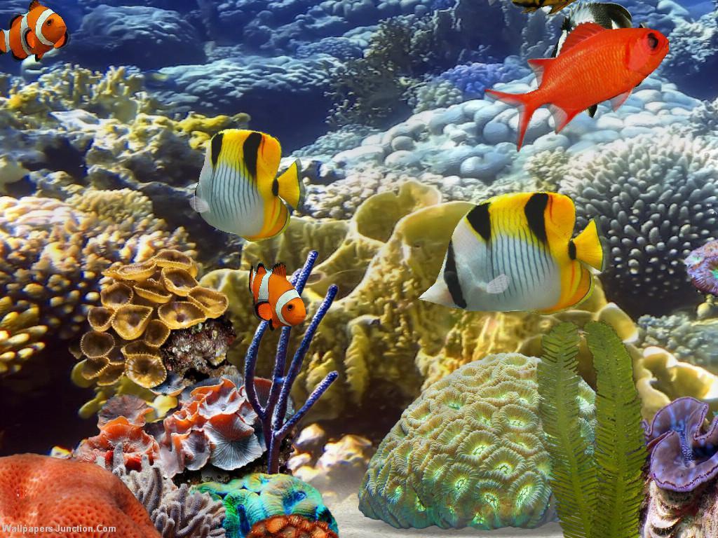 Group Of Live Fish Tank Desktop Wallpaper