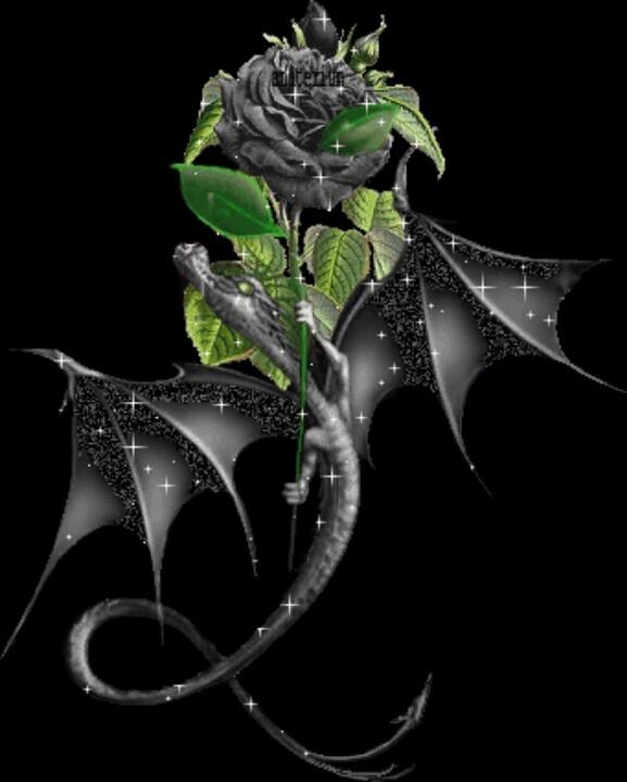 black roses 577x720
