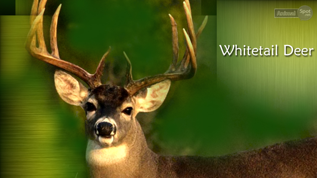 background deer wallpaper for desktop deer wallpaper deer wallpapers 1024x576