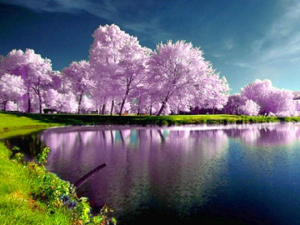 35 Beautiful Spring Pictures And Wallpapers: Spring Wallpaper High-Res