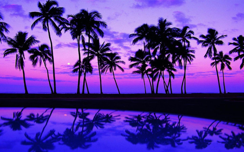 Fonds dcran Palm   Page 4 1440x900