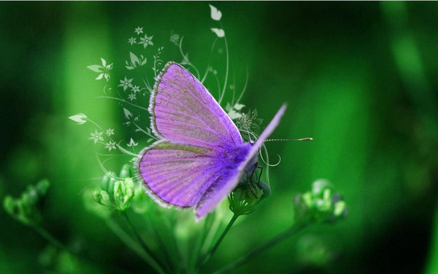 Purple Butterfly Backgrounds Wallpapersafari