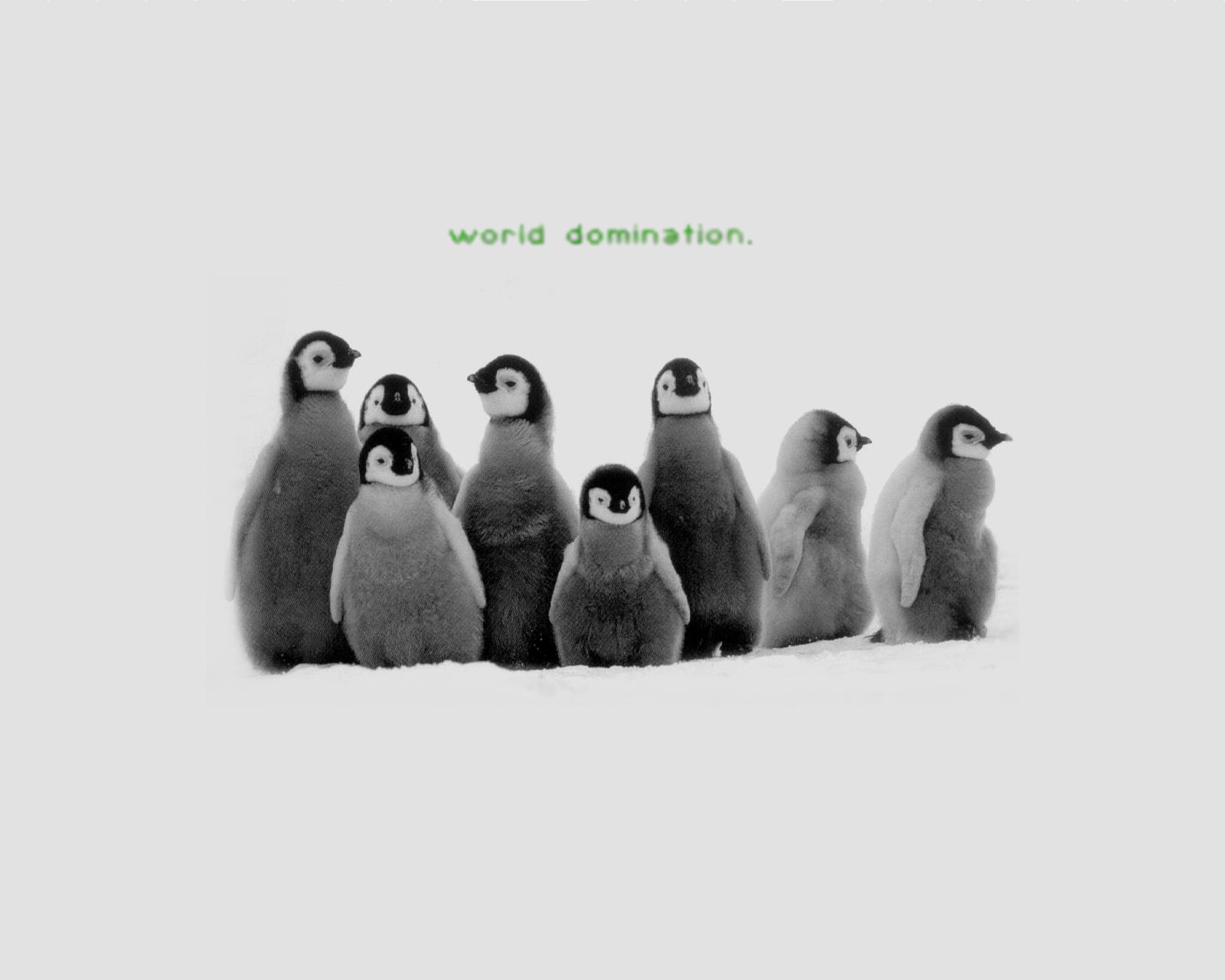 Penguin Wallpaper and Background Image 1600x1280 ID19528 1600x1280