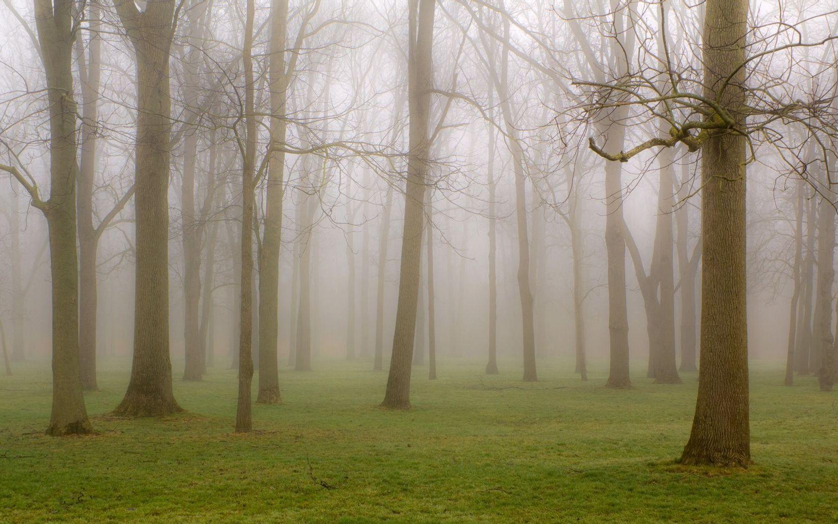 Foggy forest wallpaper 20485 1680x1050