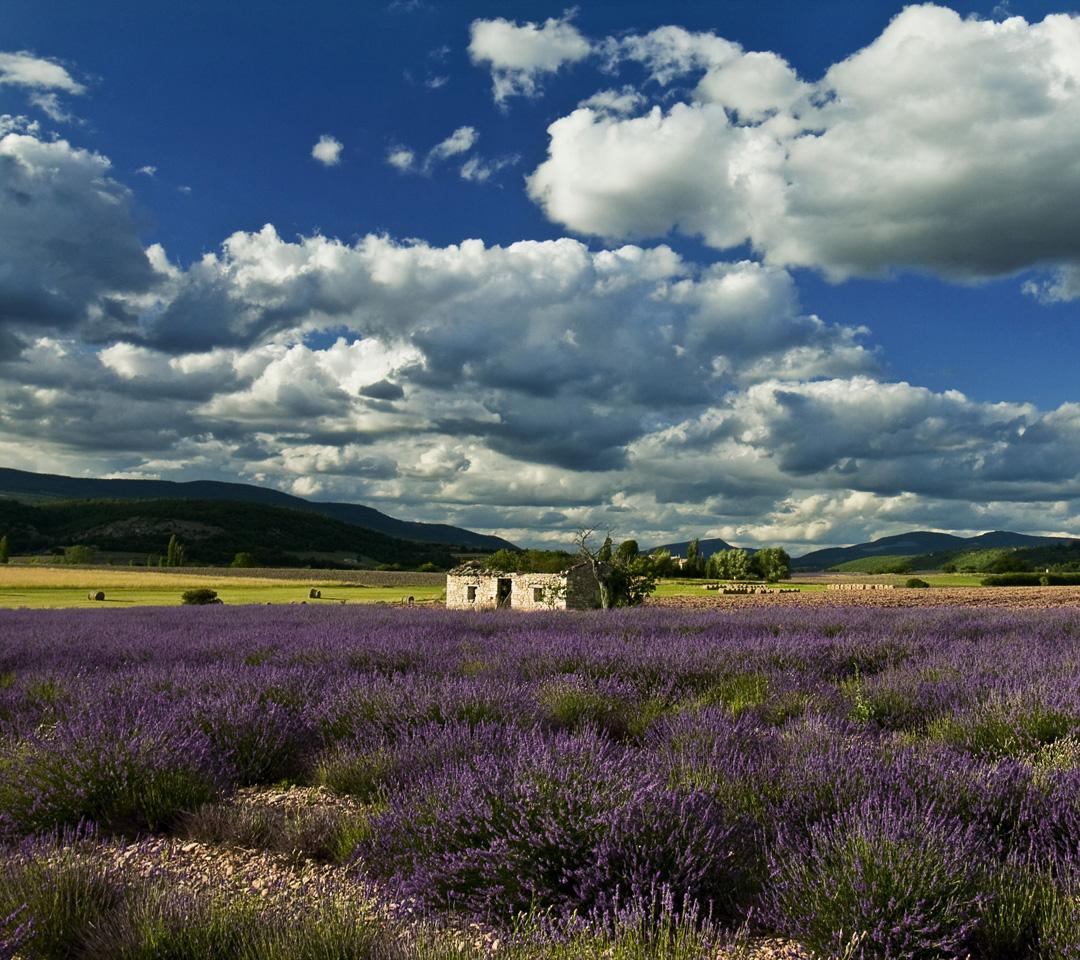 lavender farm 1080x960 Screensaver wallpaper 1080x960