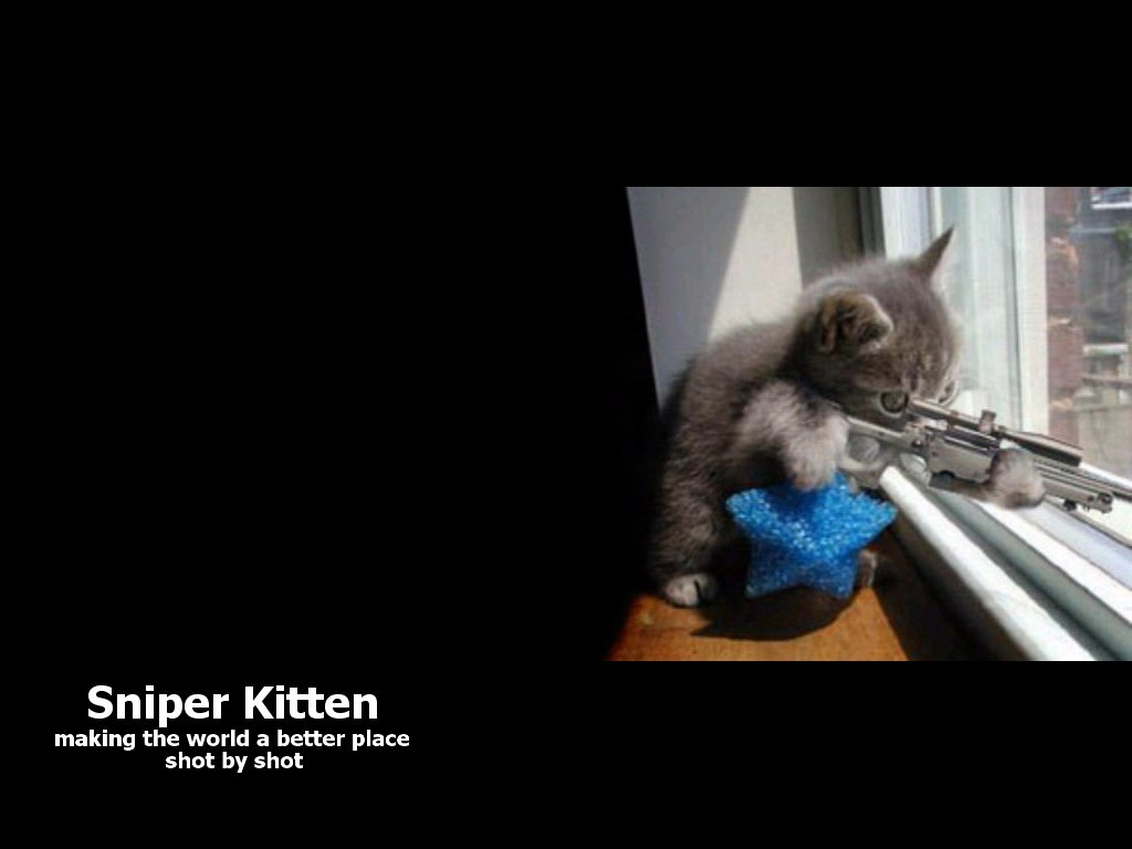 Sniper Kitten   Wallpaper 43179 1024x768