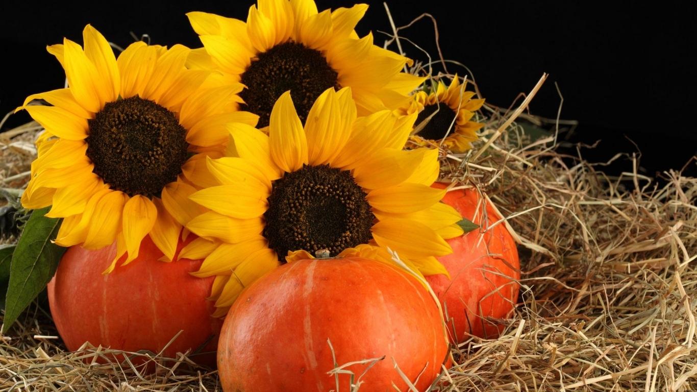 Sunflowers Pumpkins Hd Wallpaper Wallpaper List 1366x768
