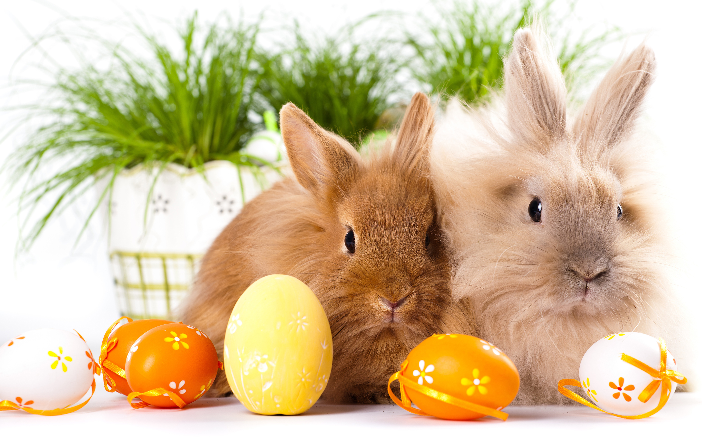 Easter Bunny Backgrounds HD Easter Images 2880x1800