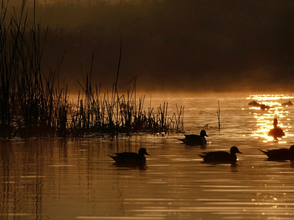 Ducks Unlimited Backgrounds Computer Hd 600x450