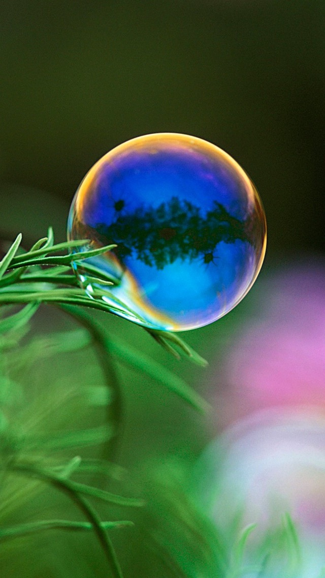 Free Download Soap Bubble And Green Leaf Wallpaper Iphone