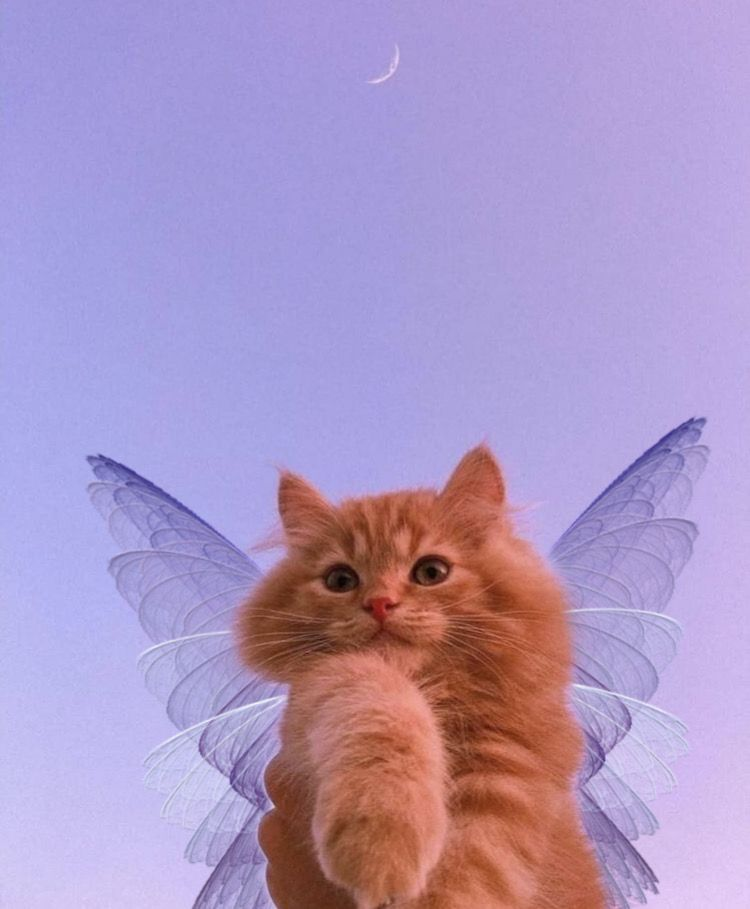 fairy kitty 2021 Komik kedi yavrular Sevimli hayvan yavrular 750x909