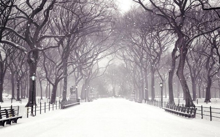 Winter Snow Animated Wallpapers multimedia gallery 700x436