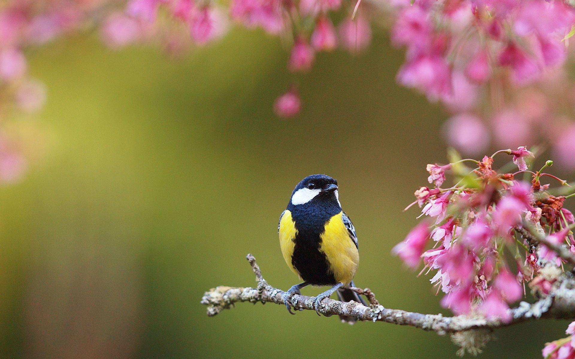 Ultra HD bird spring flowers Ultra HD Animals Wallpapers 1920x1200