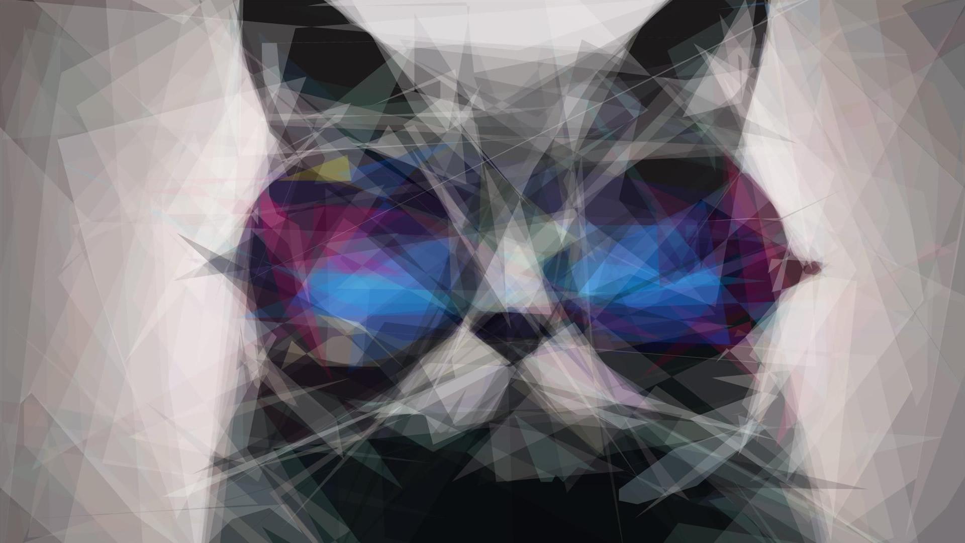 Cat in the Glasses HD Wallpaper FullHDWpp   Full HD Wallpapers 1920x1080
