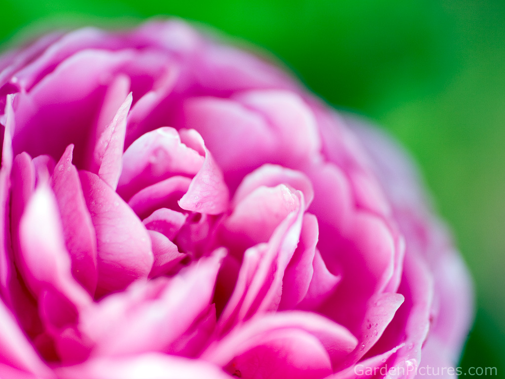 green and pink background - Fieldstation.co for Green And Pink Flower Wallpaper  70ref