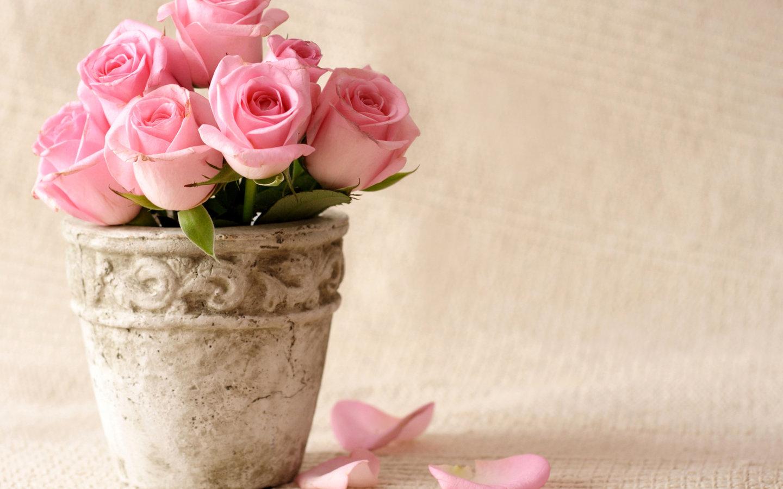 Pink Flowers HD Wallpaper - WallpaperSafari