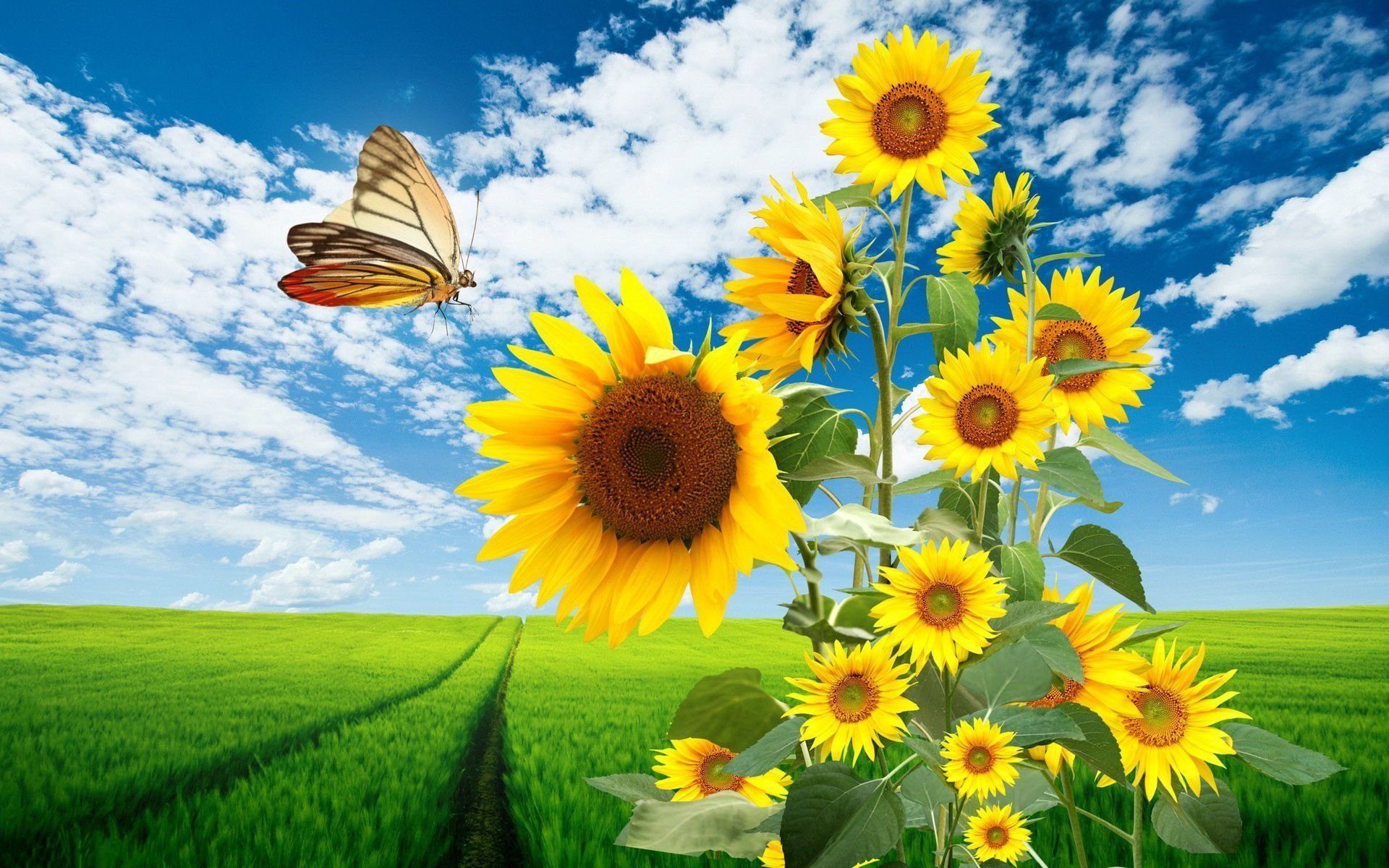 453 Sunflower HD Wallpapers Background Images 1920x1200