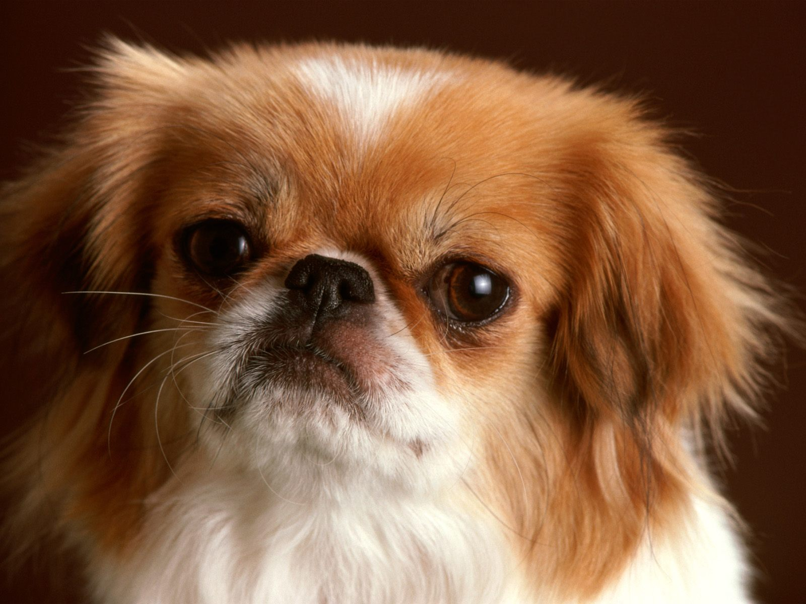 Beautiful Dogs Wallpapers TipTop 3D HD Wallpapers Collection 1600x1200