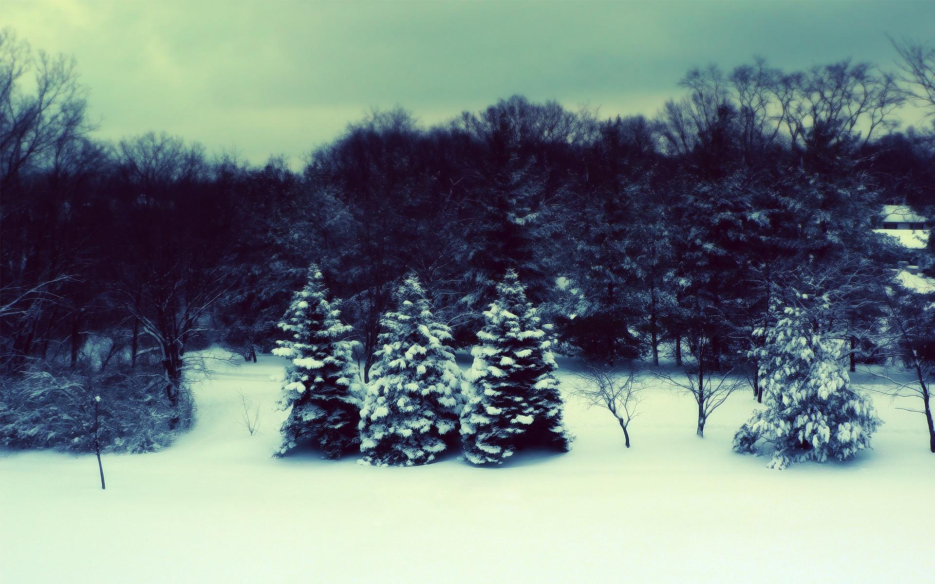 Dreary Snow Forest desktop wallpaper 1920x1200