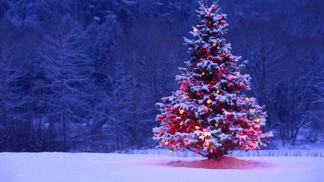 Christmas iPhone Wallpaper Christmas Tree Wallpaper iPhone App 1280x720