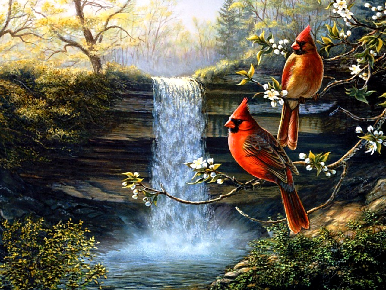 Cardinals birds   HERITAGE CARDINALS Wallpapers   HD Wallpapers 95125 1280x960