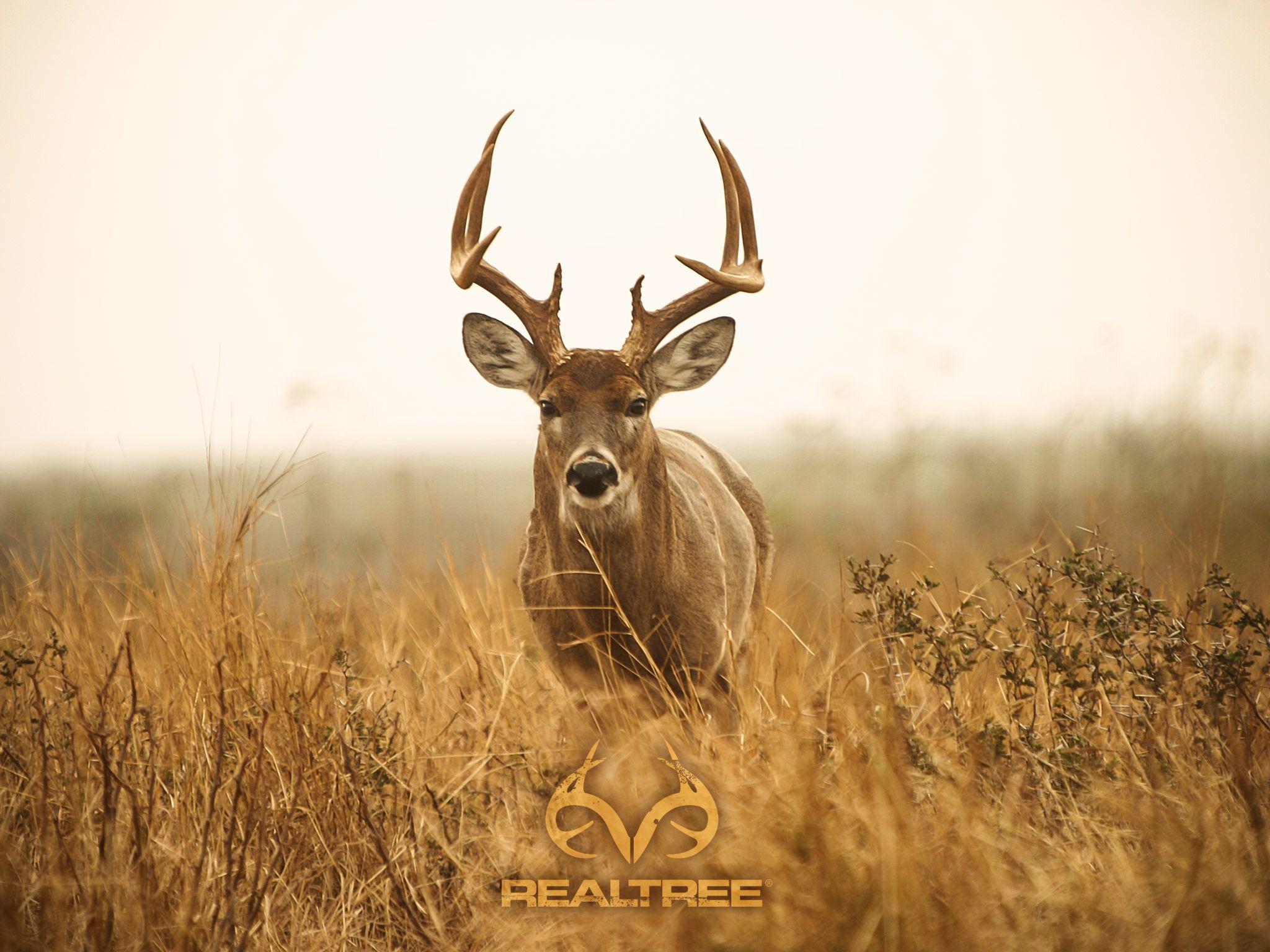 Big Whitetail Buck Wallpaper 56 images Hunting wallpaper Deer 2048x1536