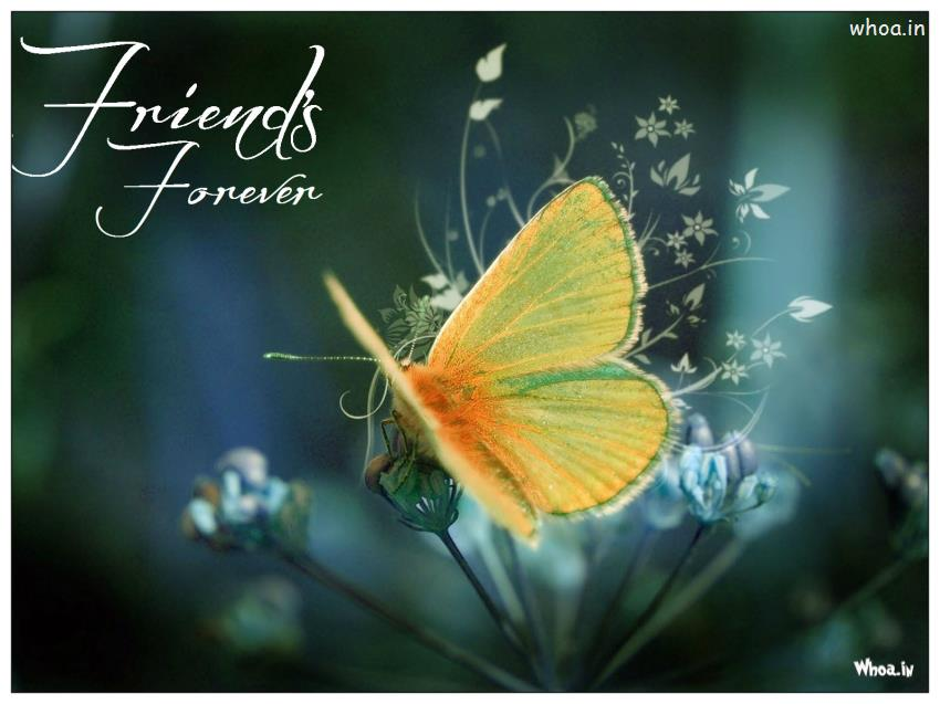 Friends Forever Butterfly Wallpaper 850x637