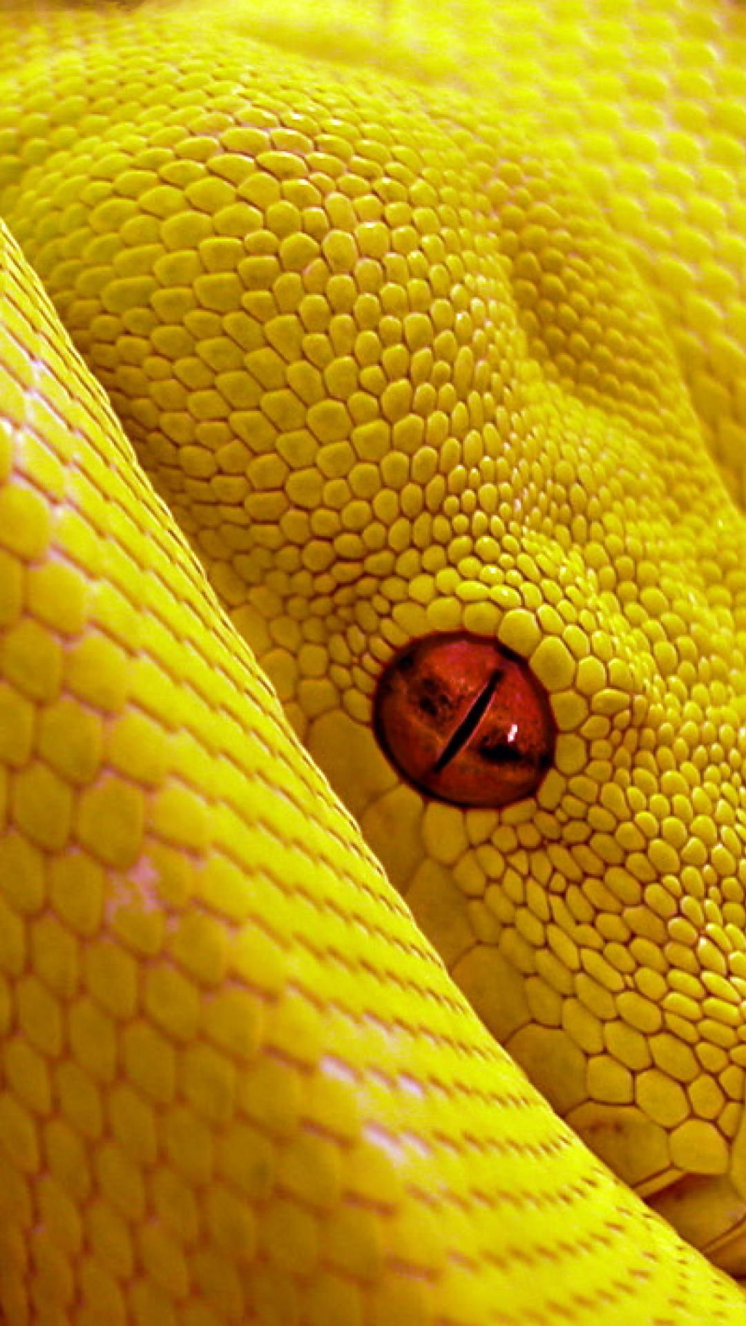 snake yellow high resolution 90QV 1080x1920