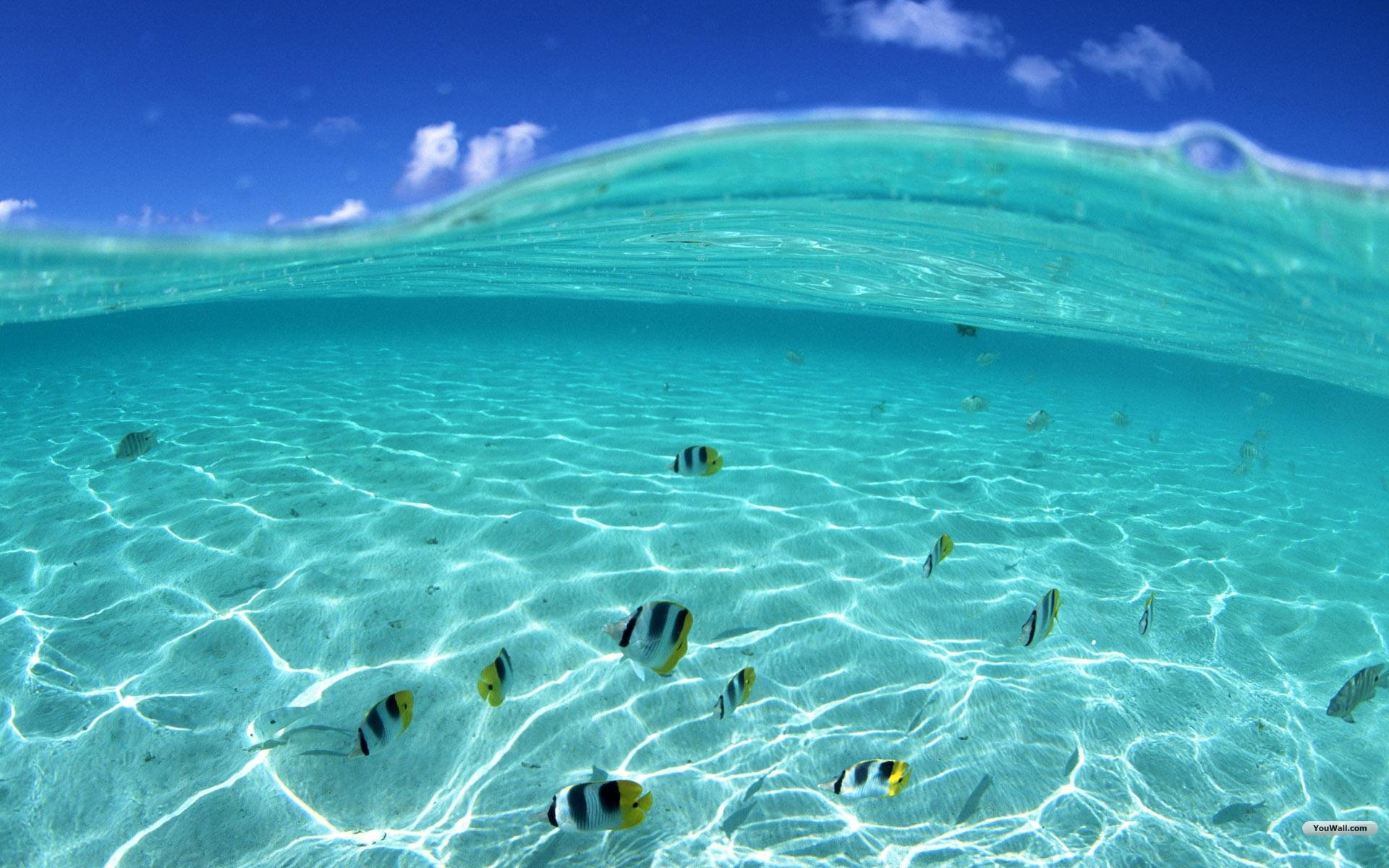 Under Sea Wallpaper HD 2565 Wallpaper Cool Walldiskpapercom 1920x1200
