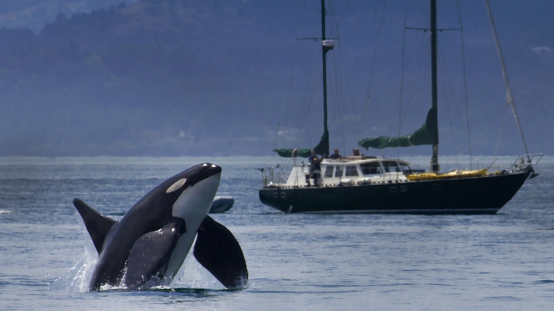 Killer whale yacht orca ship boat wallpaper 1920x1080 467060 1920x1080